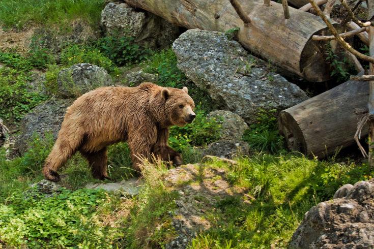 Ausflugsziel Zoos Tierparks